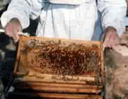 بيع خلاية النحل